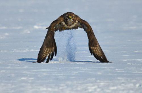 levantando-voo