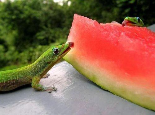 Adoramos melancia
