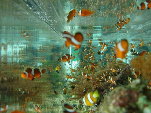 encontraram nemo